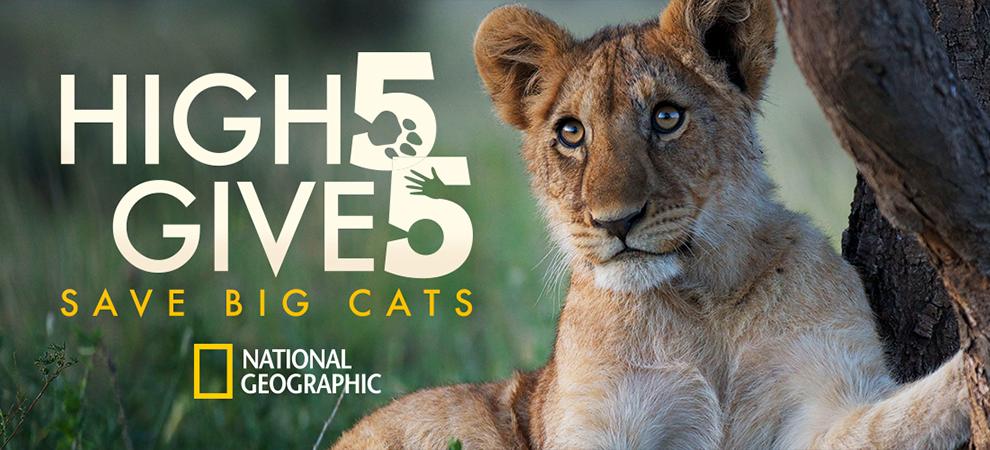 Día Mundial del León y #5forBigcats