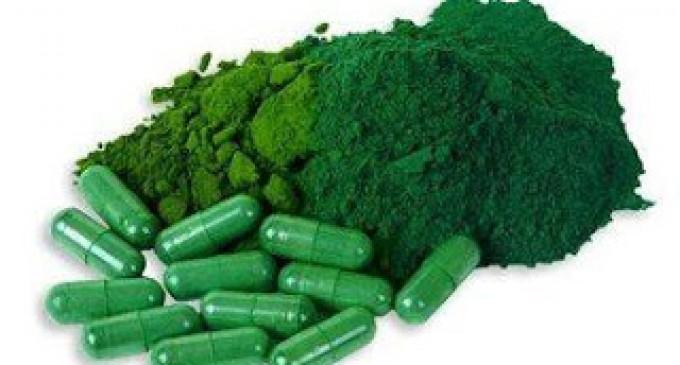 12 propiedades de las algas verdiazules AFA