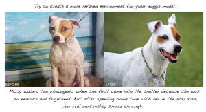 Seeth Casteel, salvando animales a través de la fotografía