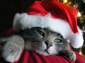 ¿La Navidad es siempre sinónimo de alegría y felicidad?