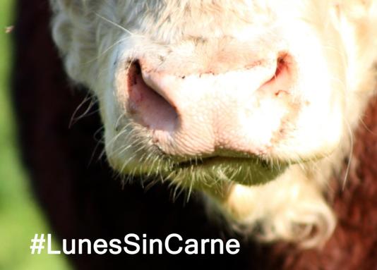 #LunesSinCarne: Ejemplos de proteínas NO animales para todos (vol. II)