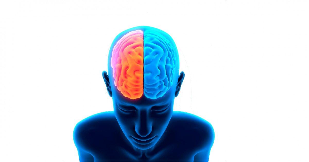 gaba y cerebro