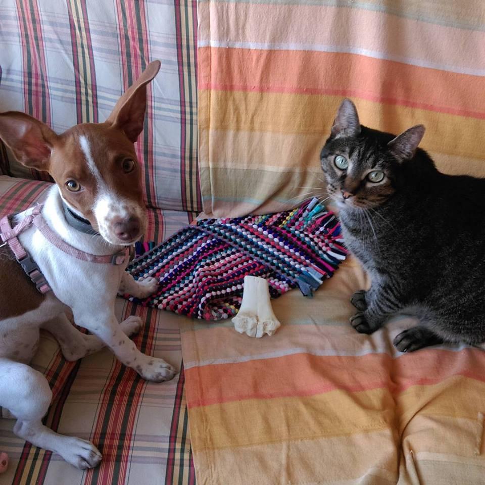 Los perros y los gatos NO SON UN JUGUETE