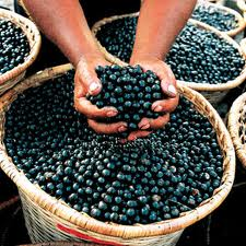 Bayas de acaí, una buena fuente de nutrientes y antioxidantes
