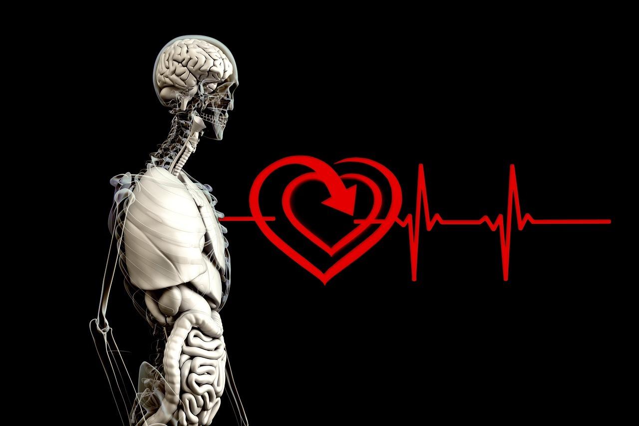 cuerpo con corazon e higado
