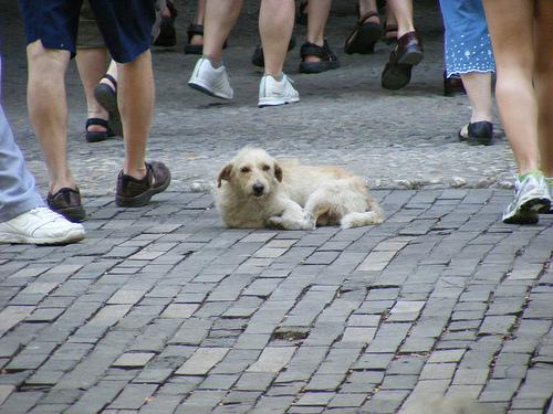 No al abandono de gatos y perros en verano