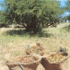 Aceite de argán: Oro líquido de Marruecos