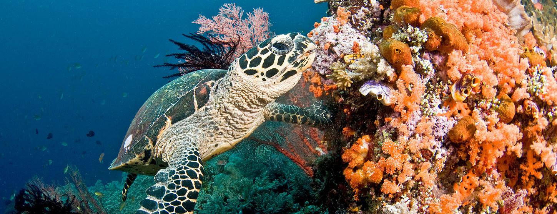 blue beauty arrecifes coral