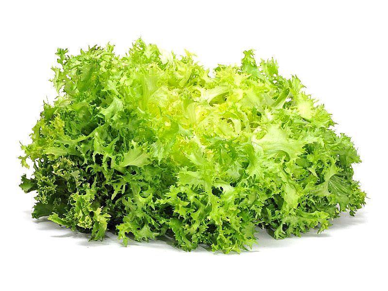 Escarola para nutritivas ensaladas de invierno