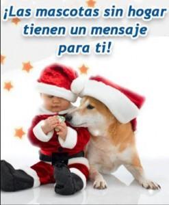 Un mensaje de Navidad de las mascotas sin hogar
