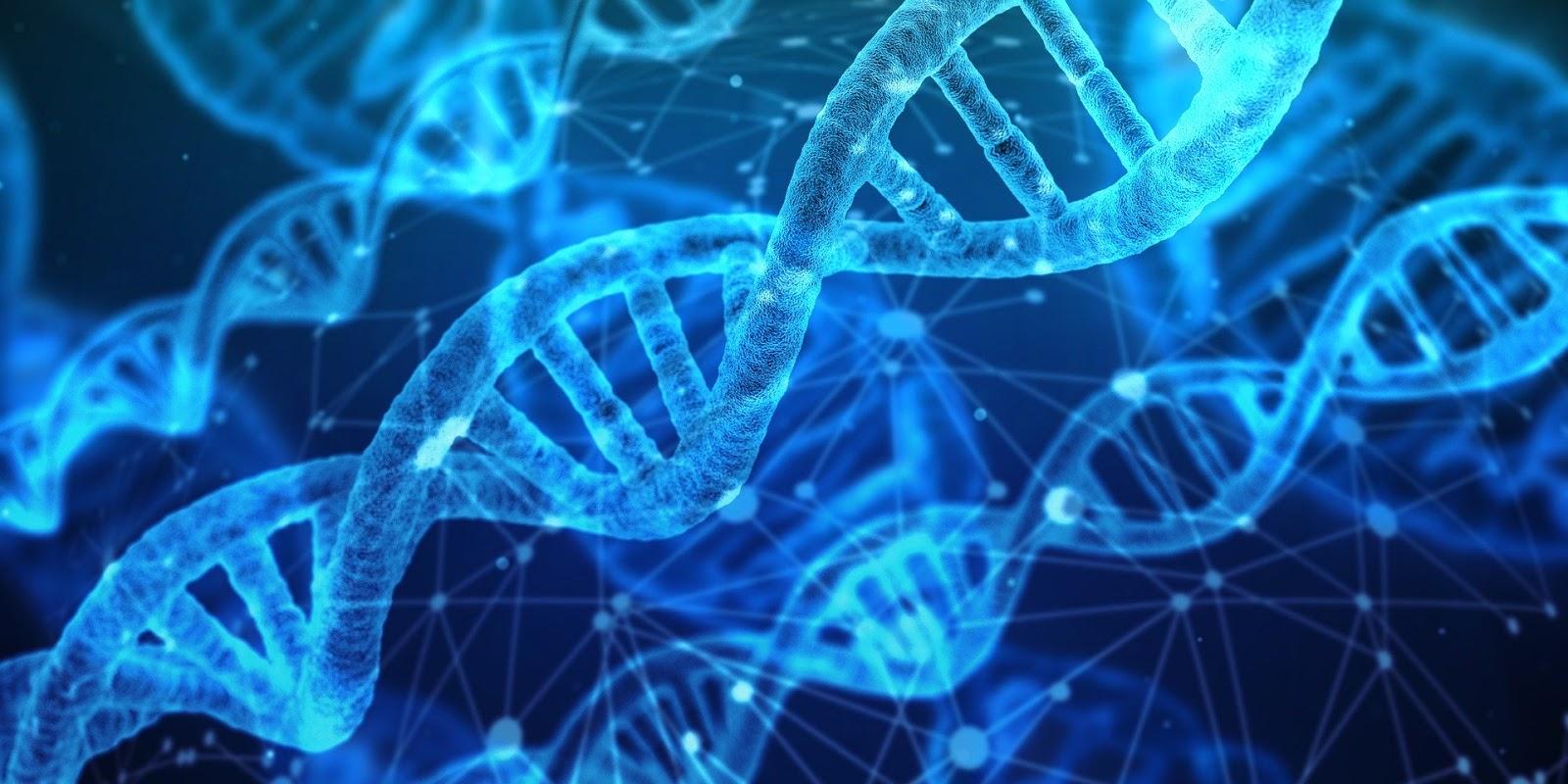 ADN estudio
