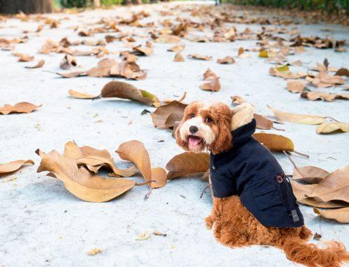 Cuidados para nuestro perro y/o gato ante el frío