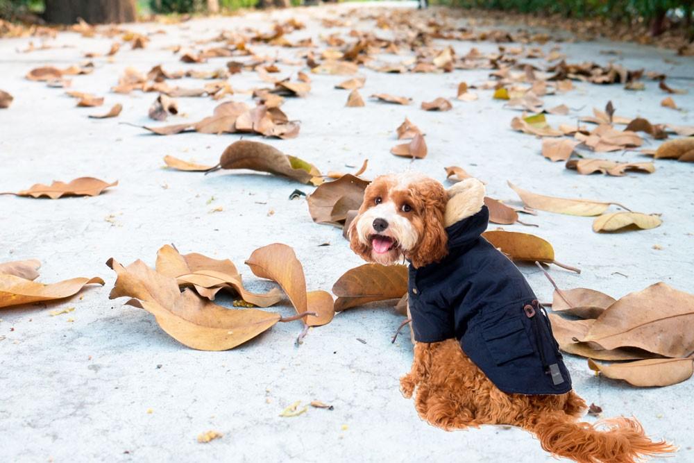 perro con abrigo