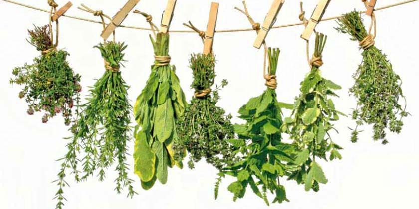 Plantas con fines curativos en fitoterapia más utilizadas