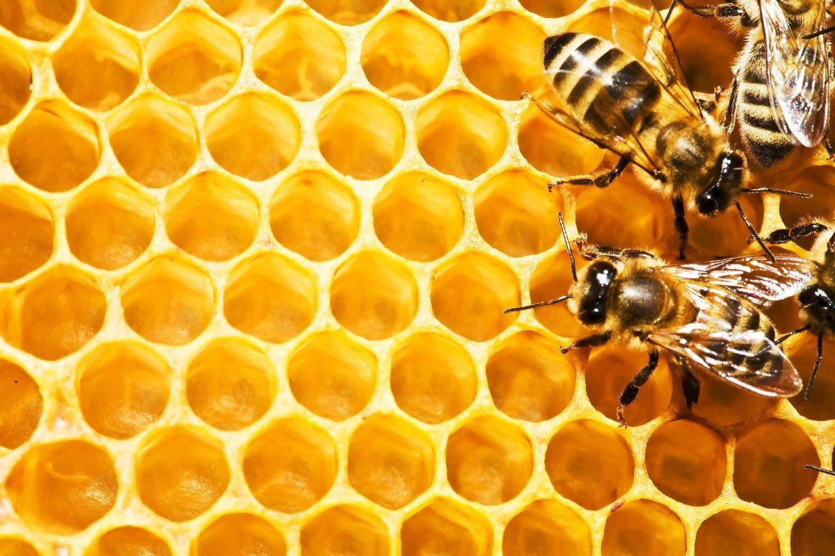 paneles de abejas