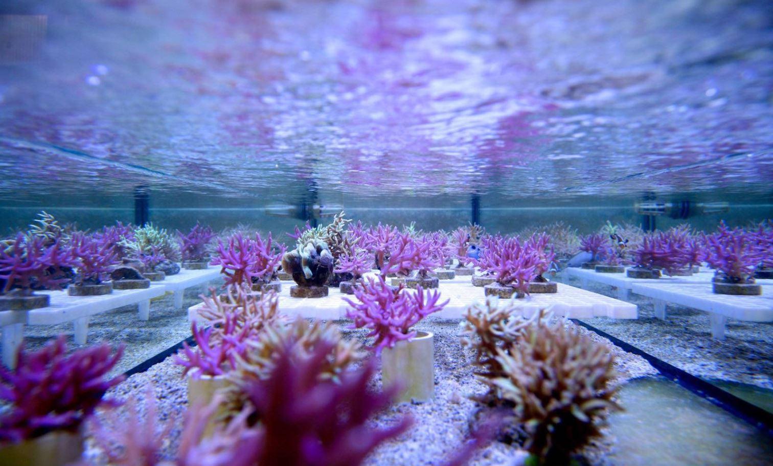 REEF WATER coral de arrecife para la belleza de la piel