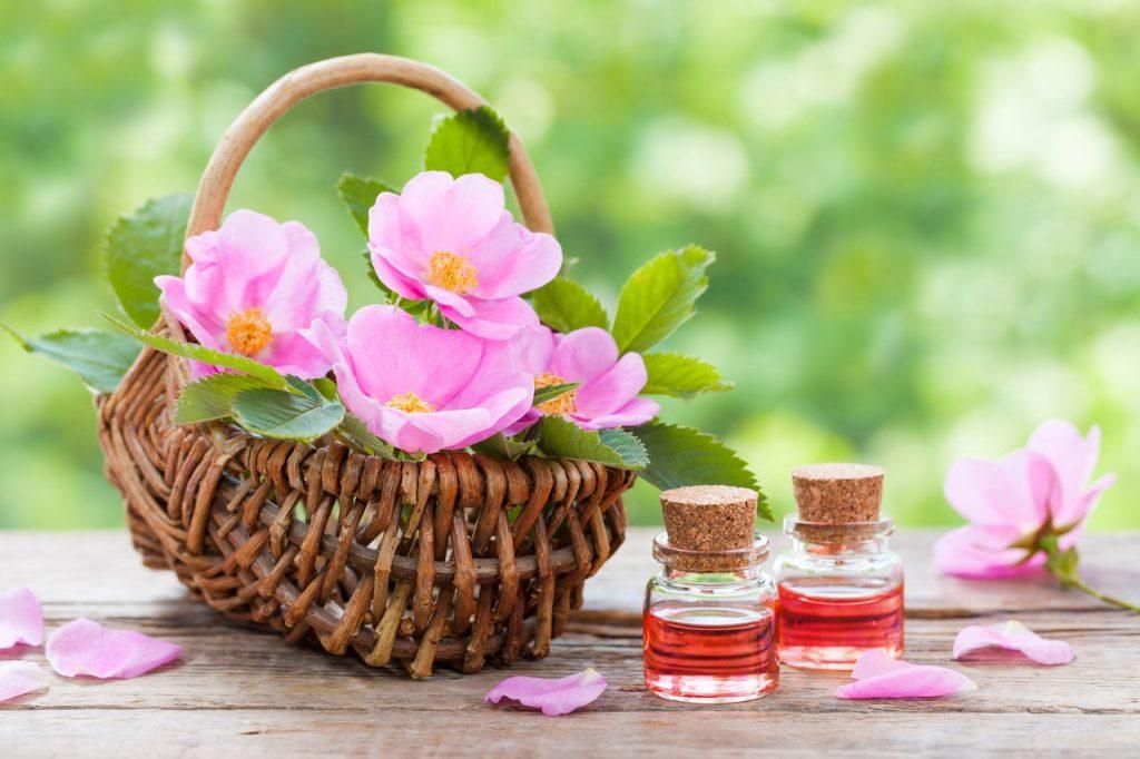 Rosa mosqueta, nutritiva, reparadora y antioxidante