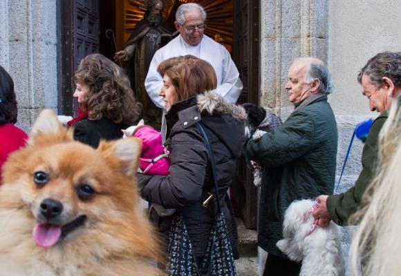 San Antón y los animales