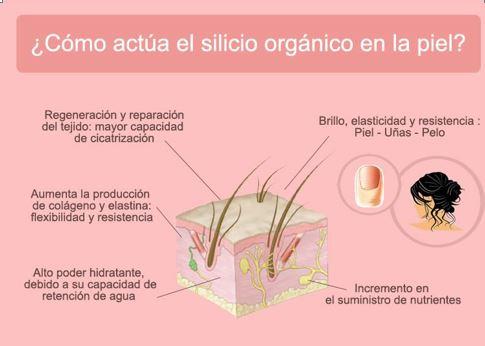 Silicio, fascia, toxinas, huesos, cabello, piel y salud